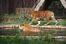 Букурещ - зоологическа градина, Музея на селото и Природо-научния музей